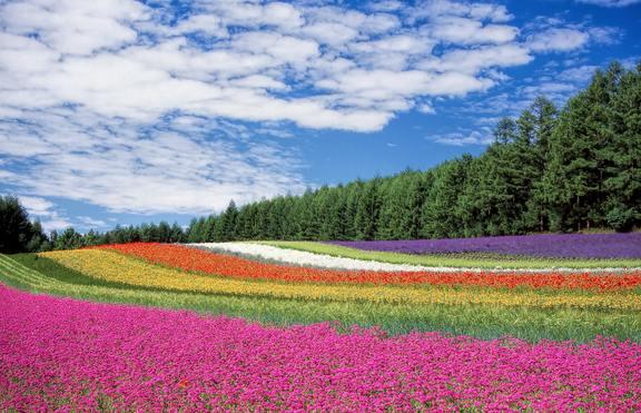 Флора - част от символите на много европейски държави