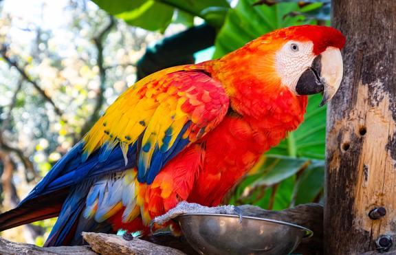 Отглеждащите птици са секси!
